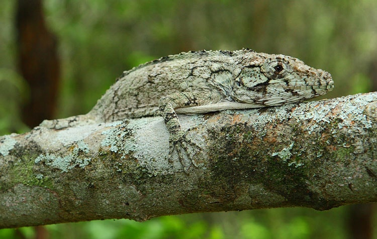 photo of lizard on a branch