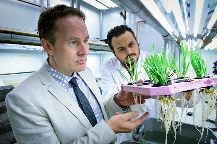 photo of Kronsucker with rice plants and grad student, examining roots