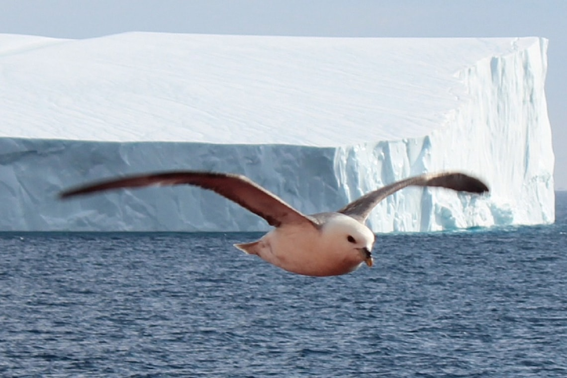 Photo of arctic seabird