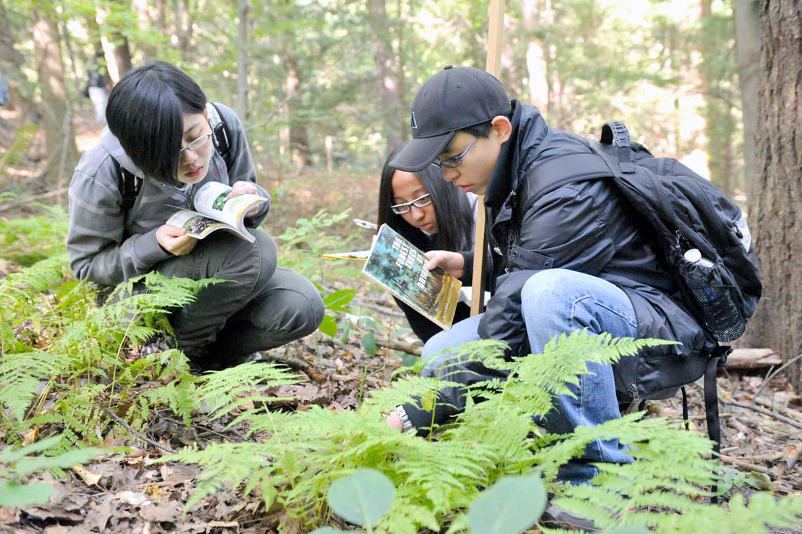 Photo of students examining plants in a forest