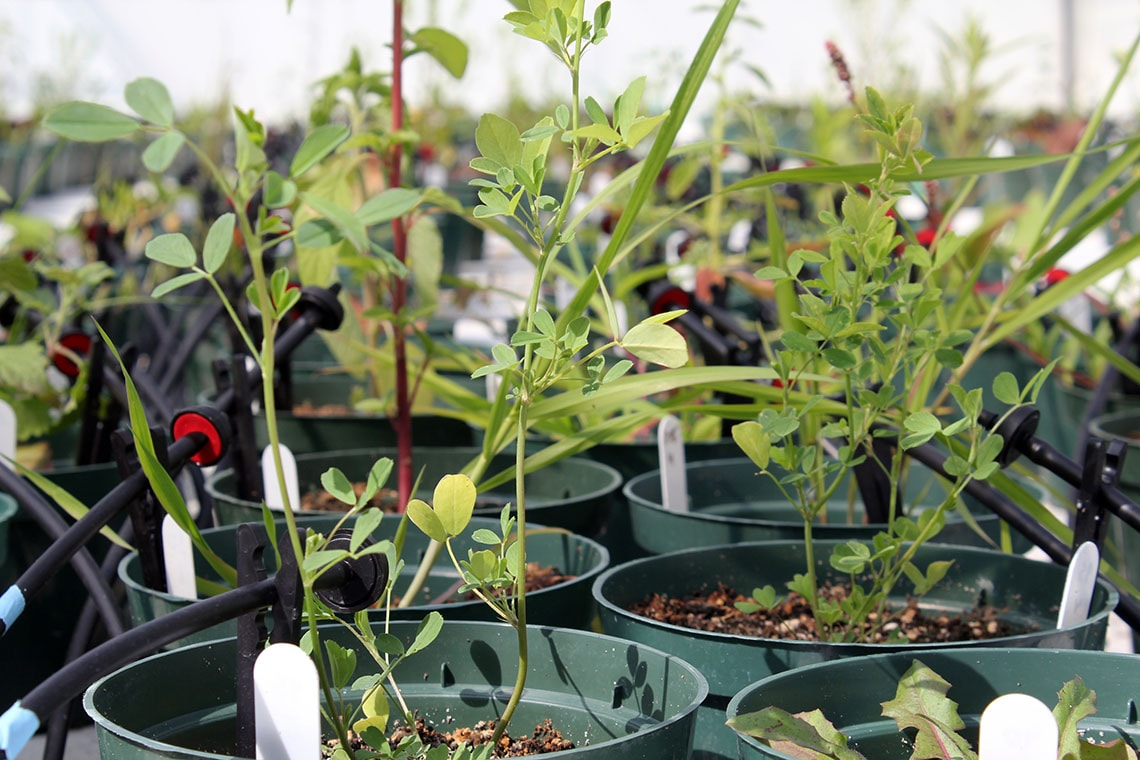 Drought-resistant plants: U of T study looks at the ...