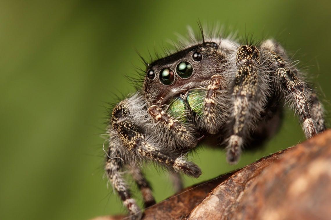 Photo of fuzzy spider