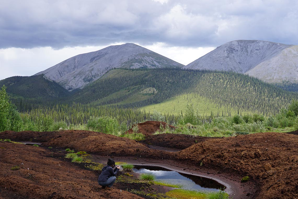 Photo of a peat plateau in the Yukon