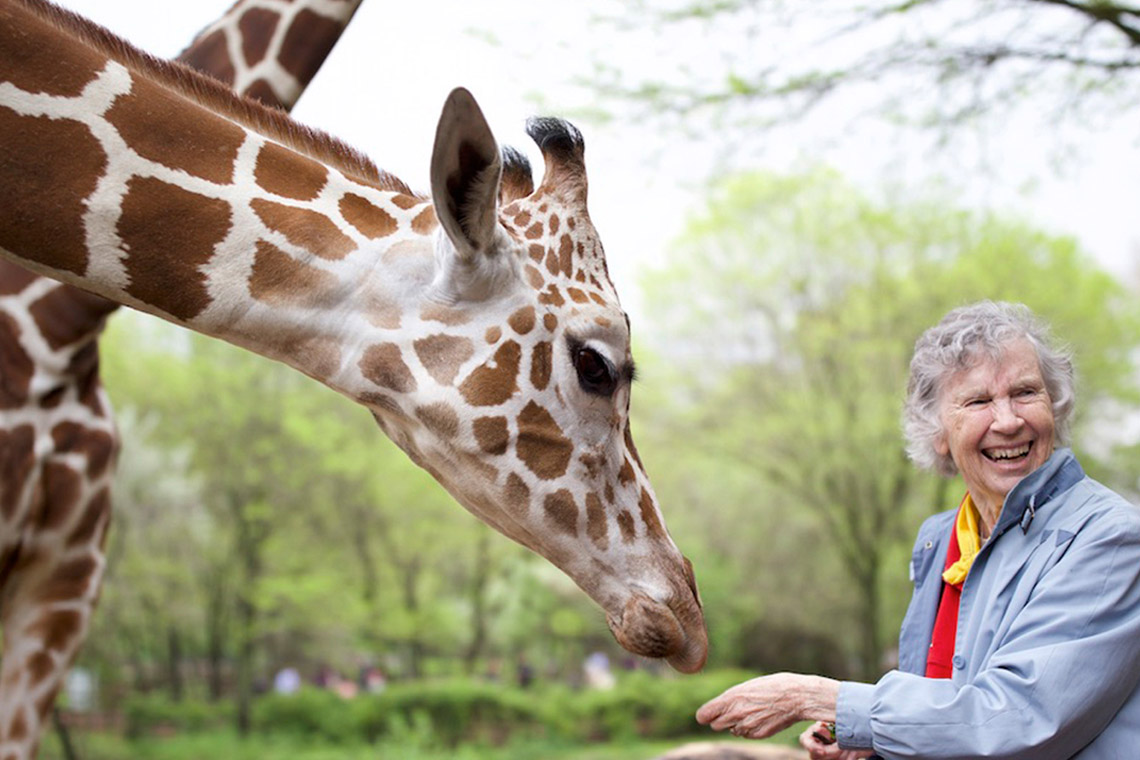 Photo of Anne Innis Dagg and giraffe