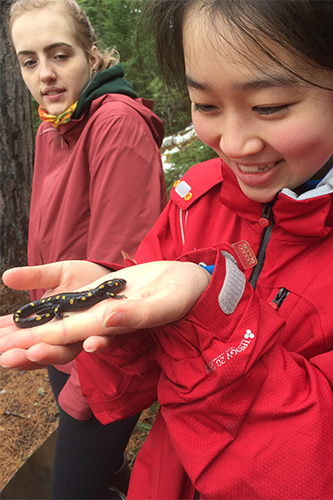 A U of T student holds a salamander in her hand in Algonquin Park