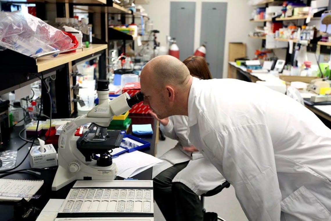 Mats Sundin looks through a microscope