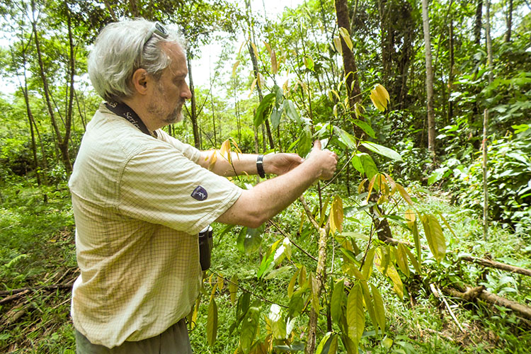 Sean Thomas examines some foliage in an ecuadorian jungle