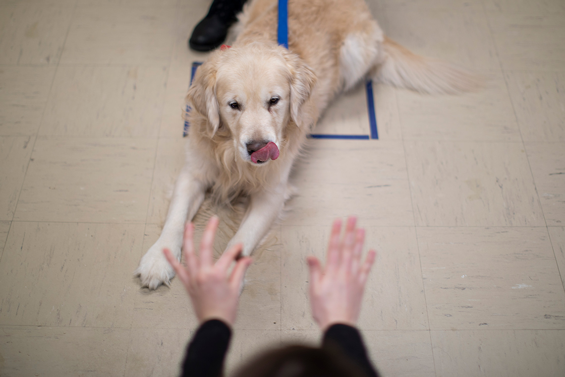 Canine cognition lab