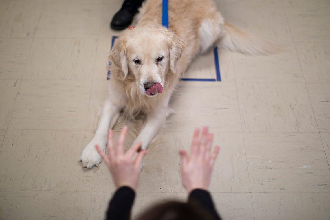 Canine cognition lab