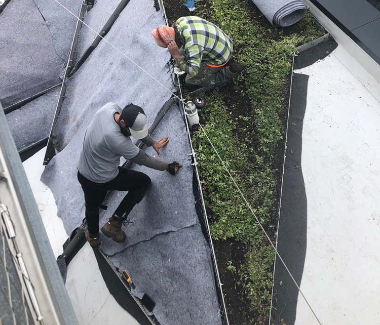 Two men install a felt backing for a green roof on the roof Daniels