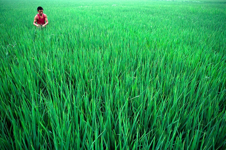 photo of rice field in China