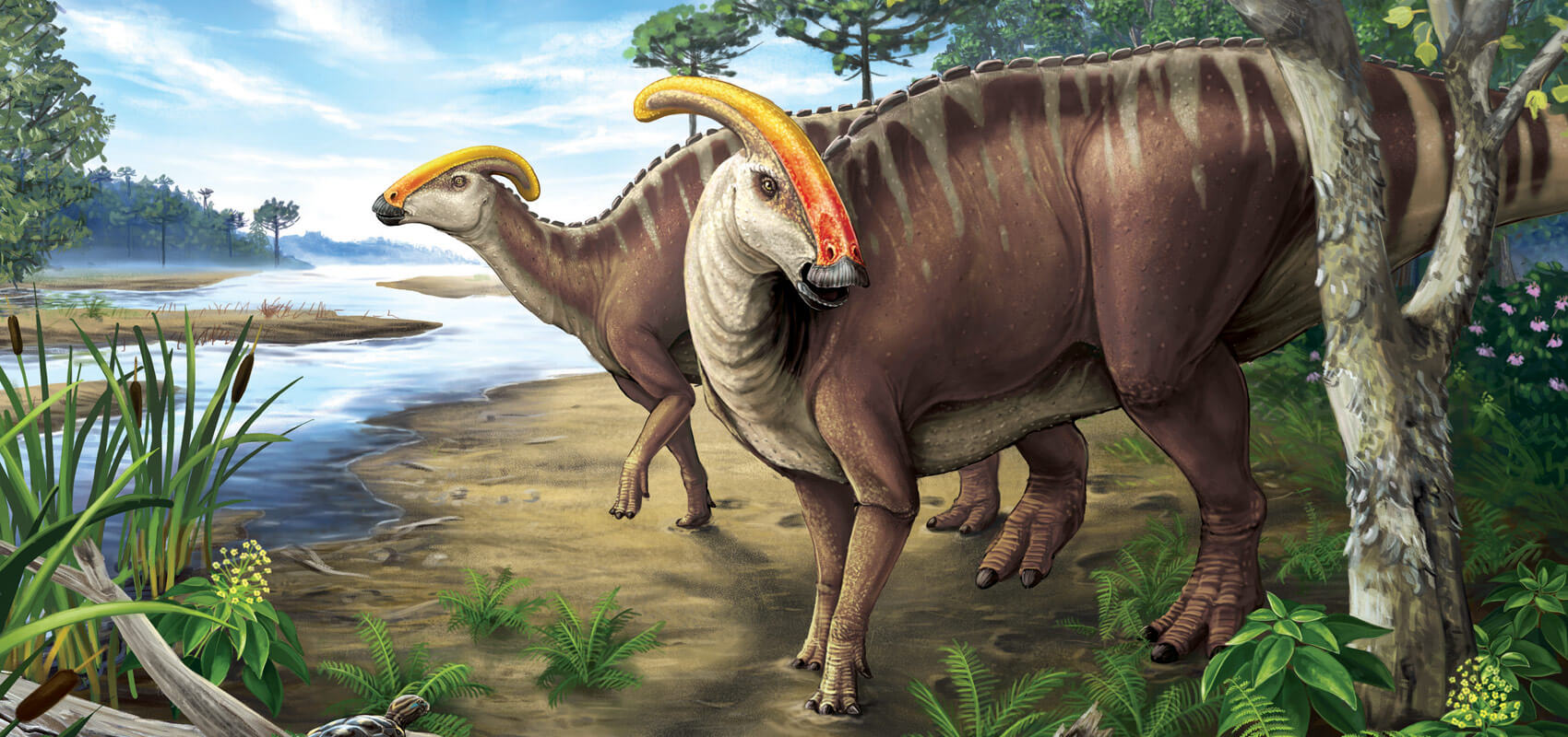 300 teeth: Duck-billed dinosaurs would have been dentist's dream