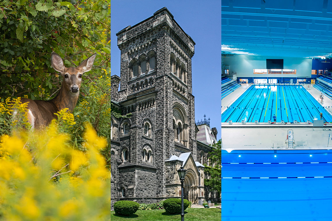 deer at UTM campus, the facade of university college at st. george, and the swimming pool at the pan am centre at u of t Scarborough