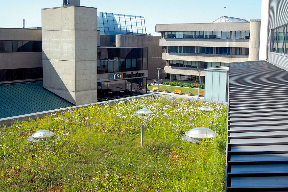 Green Roof at UTSC