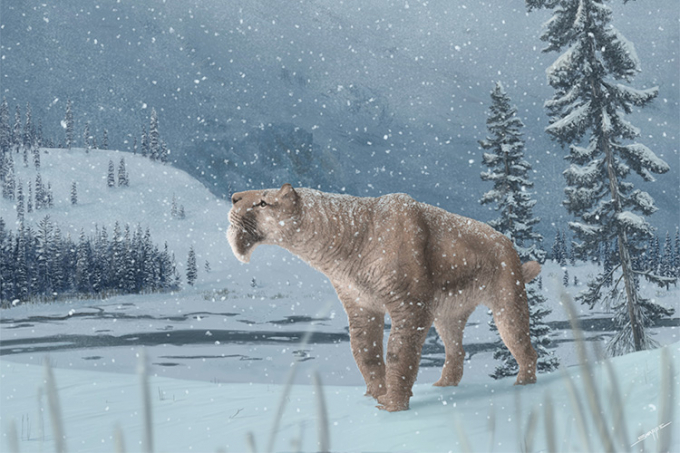 Illustration of Smilodon fatalis in a snowy Canadian winter setting