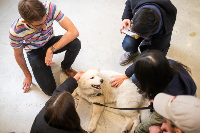 Students at the Faculty of Law pet Amadeus, the dog