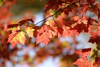 Photo of leaves changing colour