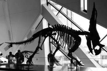 photo of dinosaur in museum