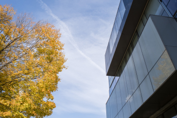 fall leaves set against a blue sky and a modern building